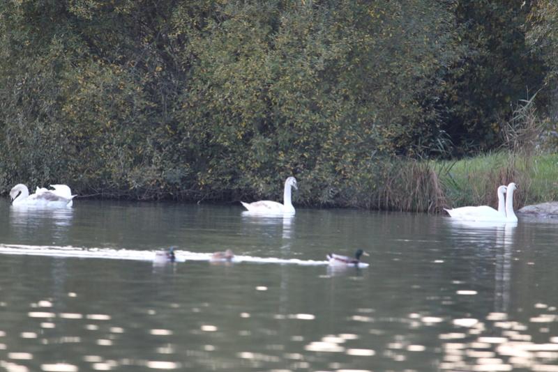 Quelques photos d'oiseaux. 624a0011
