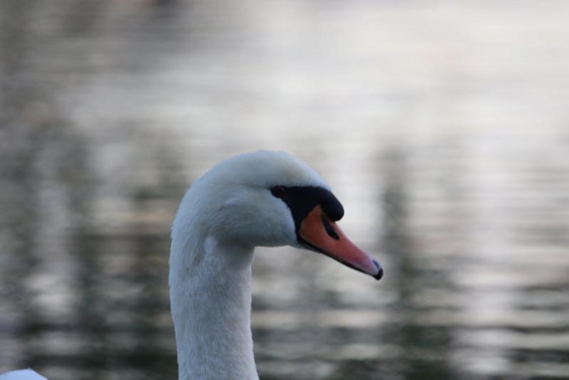 Quelques photos d'oiseaux. 624a0013