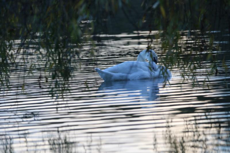 Quelques photos d'oiseaux. 624a0015