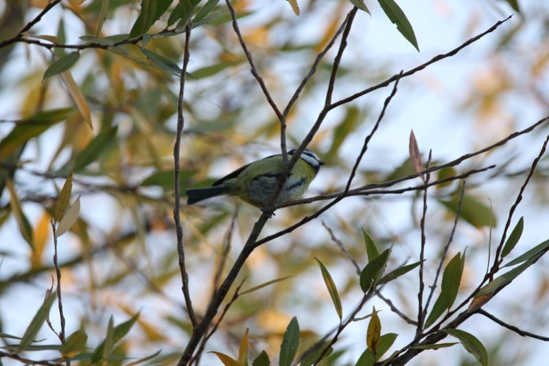Quelques photos d'oiseaux. 624a0017