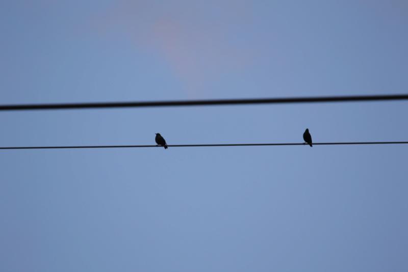Quelques photos d'oiseaux. 624a0019