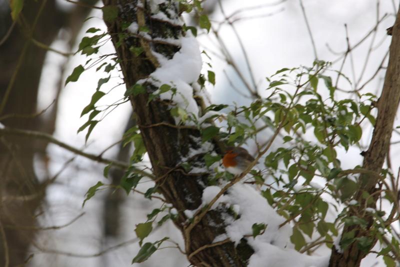 Neige et oiseaux. 624a0022