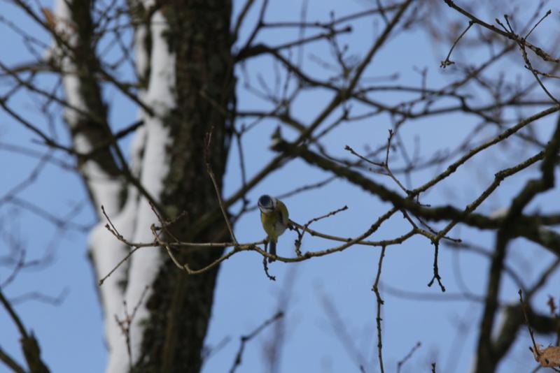 Neige et oiseaux. 624a0111