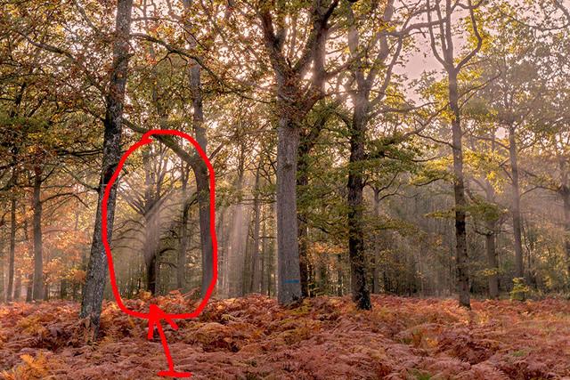 La forêt enchantée _dsc2110