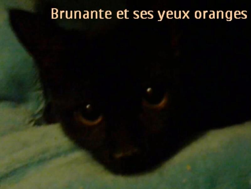 BRUNANTE Pas adoptable [BOUDZAN Relâché] Photo011