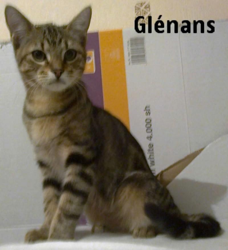 glenans - OUESSANT ET GLENANS (ex COCO 2 et JUNIOR 5) Photo110