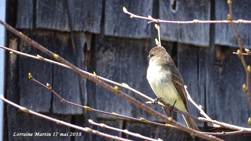Aide oiseau sur une branche  Inconn10