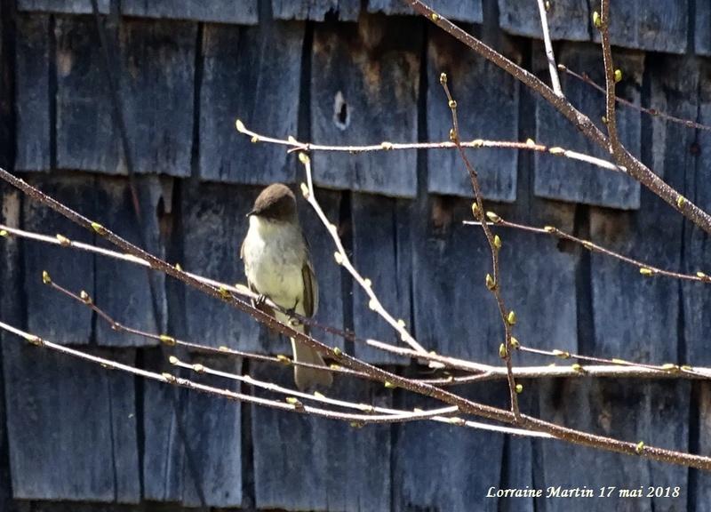 Aide oiseau sur une branche  Inconn11