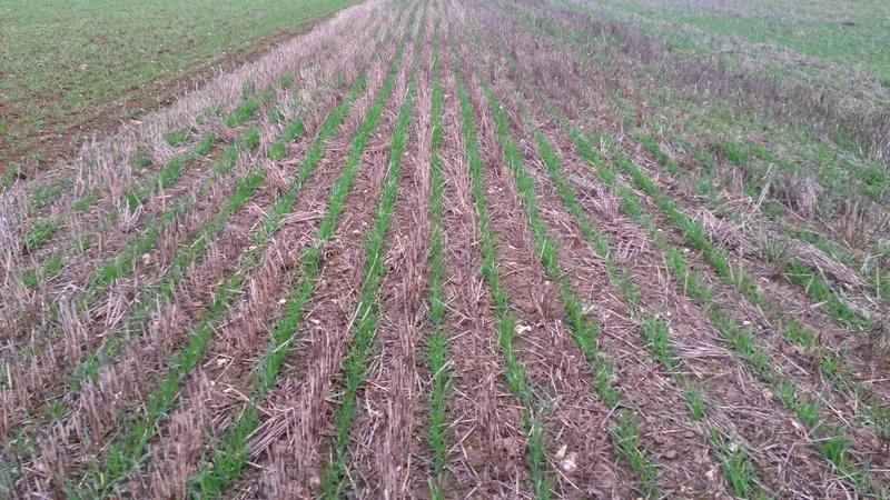 semis de céréales 2018 - Page 14 20151111