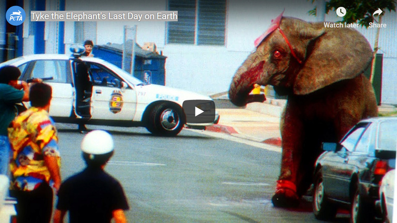Tyke the Elephant's Last Day on Earth People for the Ethical Treatment of Animal Abortion 6d852c10