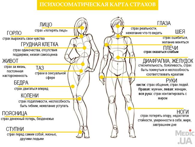 ТЕЛЕСНАЯ КАРТА СТРАХОВ  051-sh10