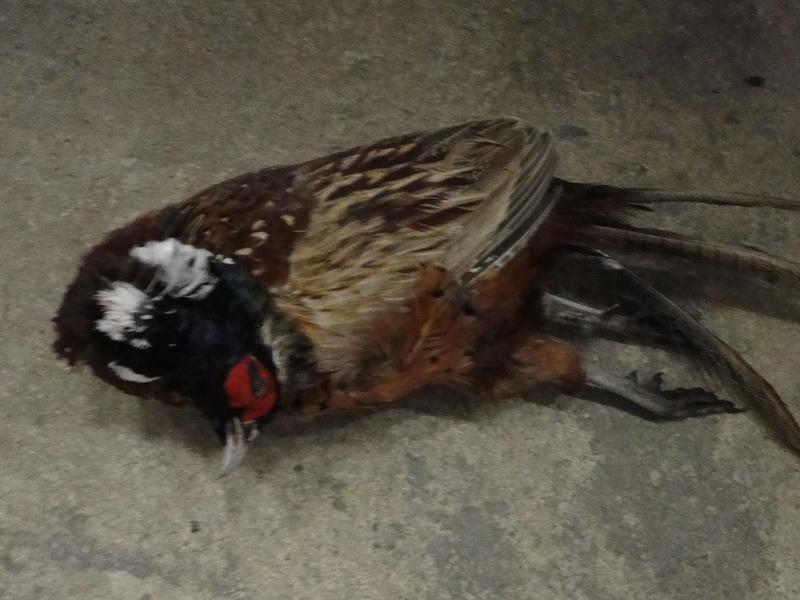 les oiseaux et petites bêtes au cours de nos balades Dsc07628