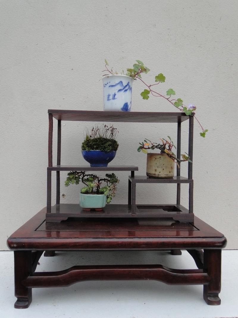armoires pour mini bonsaï  Dsc07637