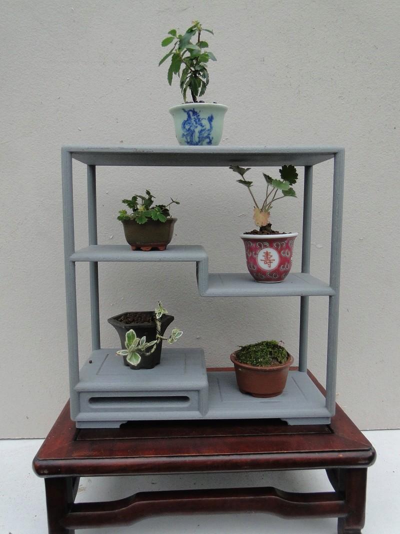 armoires pour mini bonsaï   Dsc07643