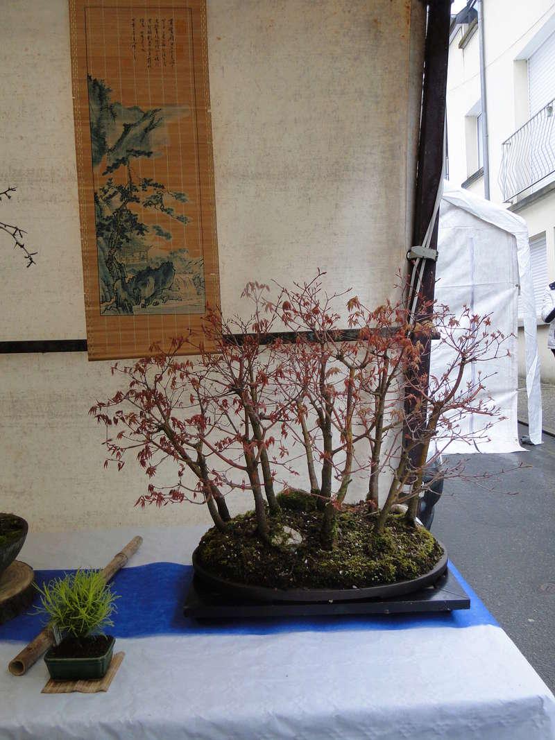 forêt de frêne (bonsaï)  Dsc08144