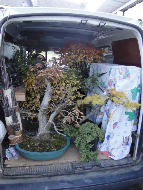 expo club bonsaï émeraude 2018  Dsc09511