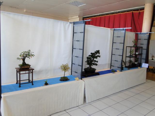 expo club bonsaï émeraude 2018  Dsc09613