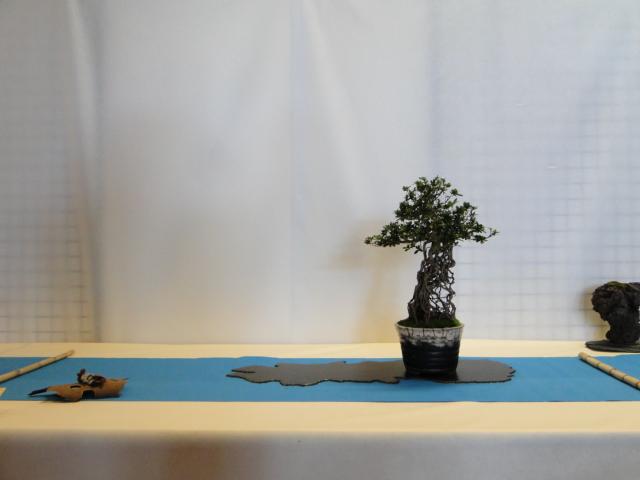 expo club bonsaï émeraude 2018  Xxxdsc10
