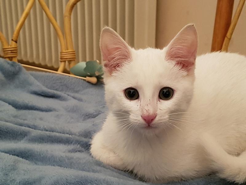Mitsi, mâle tye européen blanc né le 20 septembre 2017 20180111