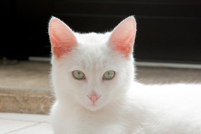 Mitsi, mâle tye européen blanc né le 20 septembre 2017 - Page 2 Mitsi-19