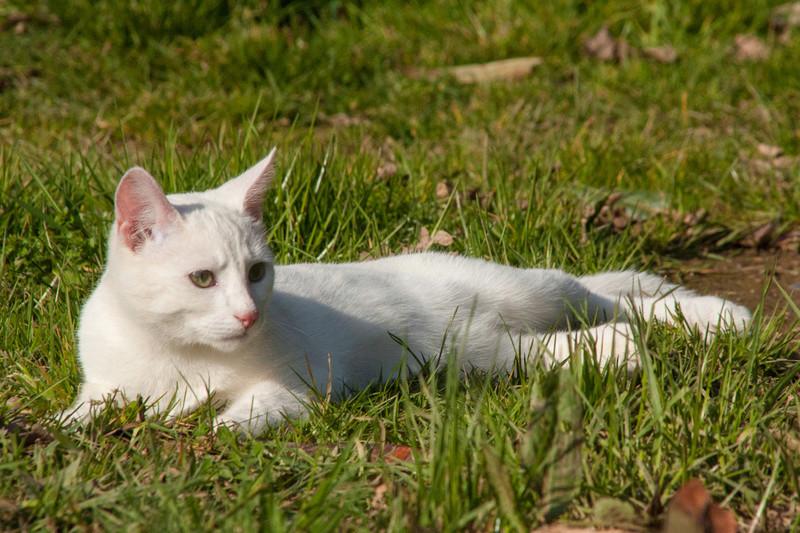 Mitsi, mâle tye européen blanc né le 20 septembre 2017 - Page 3 Mitsi-25