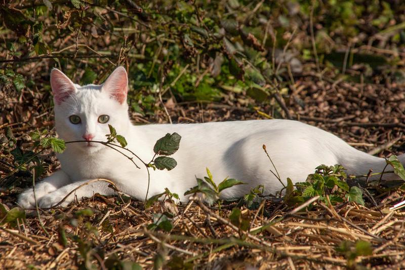 Mitsi, mâle tye européen blanc né le 20 septembre 2017 - Page 3 Mitsi-26