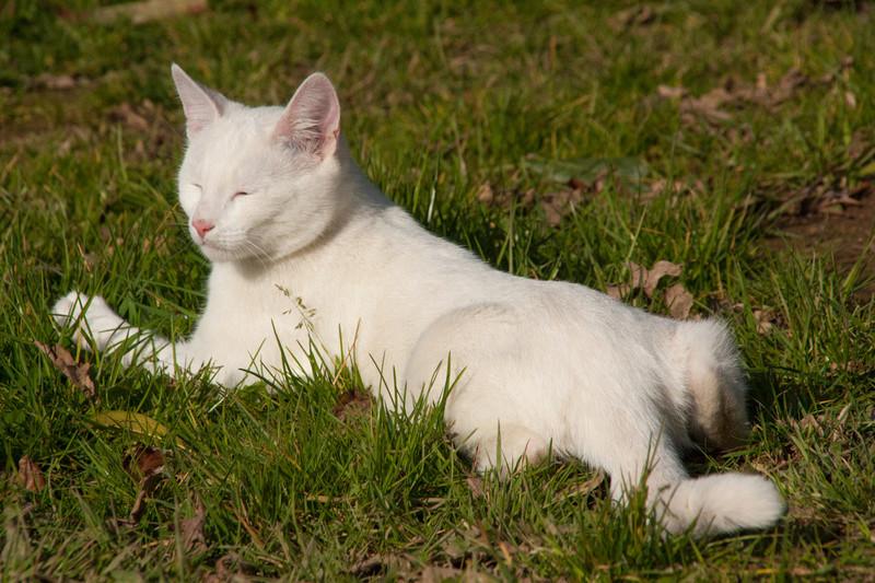 Mitsi, mâle tye européen blanc né le 20 septembre 2017 - Page 3 Mitsi-27