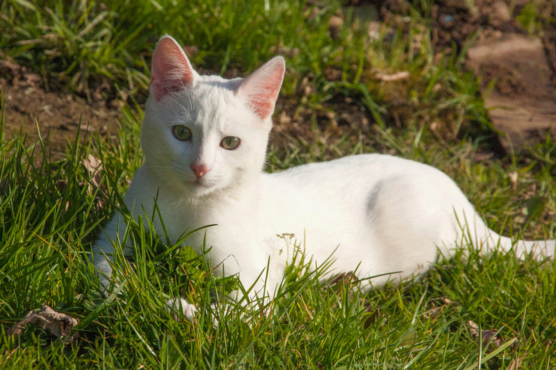 Mitsi, mâle tye européen blanc né le 20 septembre 2017 - Page 3 Mitsi-28
