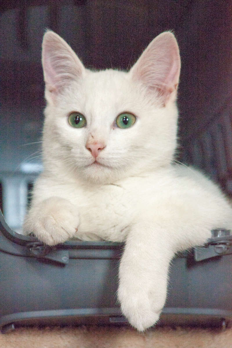 Mitsi, mâle tye européen blanc né le 20 septembre 2017 - Page 2 Mitsi10