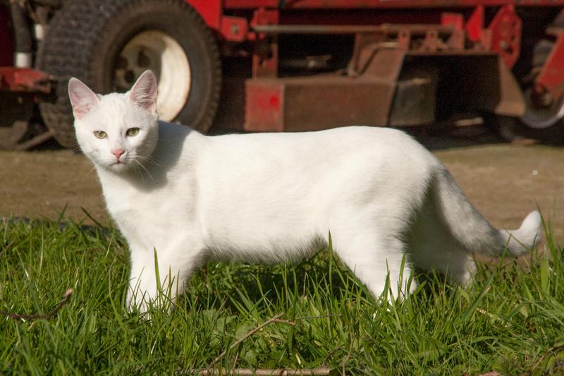 Mitsi, mâle tye européen blanc né le 20 septembre 2017 - Page 3 Mitsi11