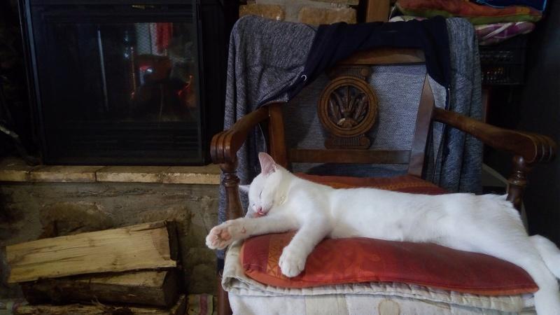 Mitsi, mâle tye européen blanc né le 20 septembre 2017 P_201823