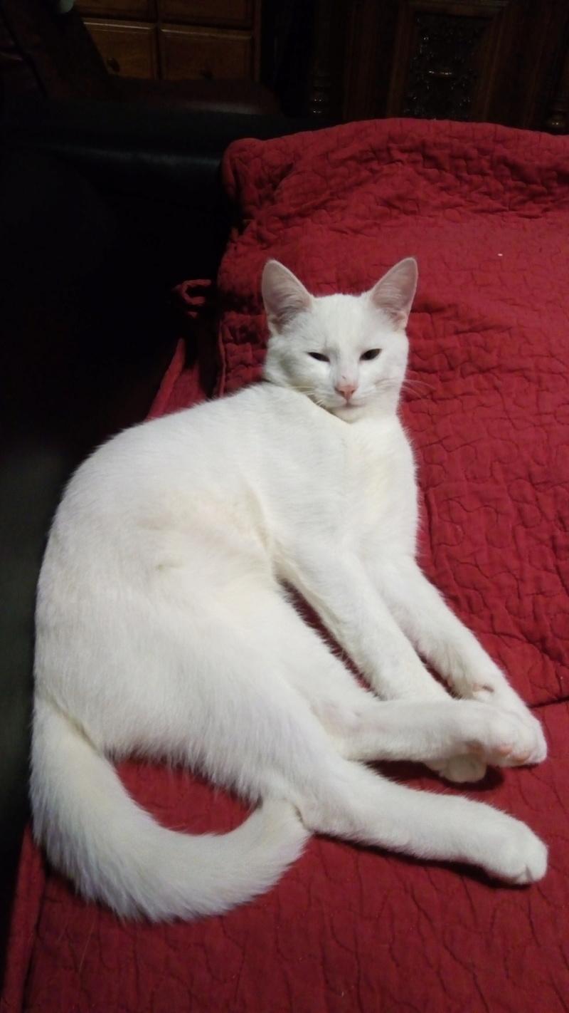 Mitsi, mâle tye européen blanc né le 20 septembre 2017 P_201833