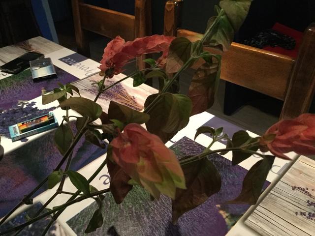 Au troc de vally plante crevette ou beloperone gutata 22354010