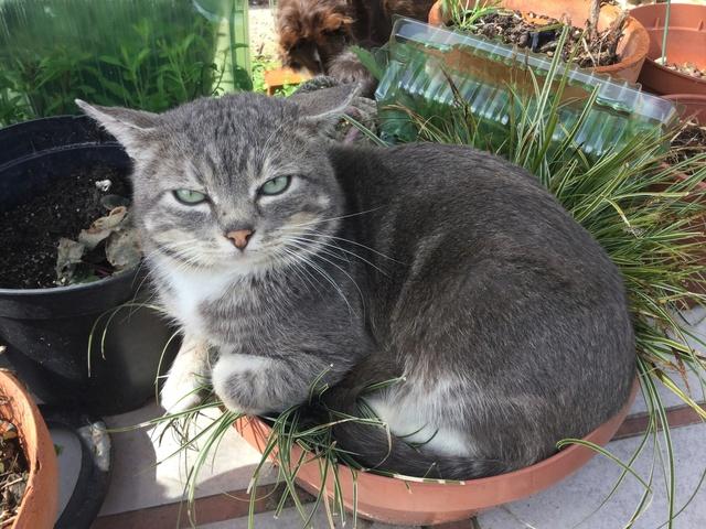 Comment éloigner les chats de son jardin ? 76597f10