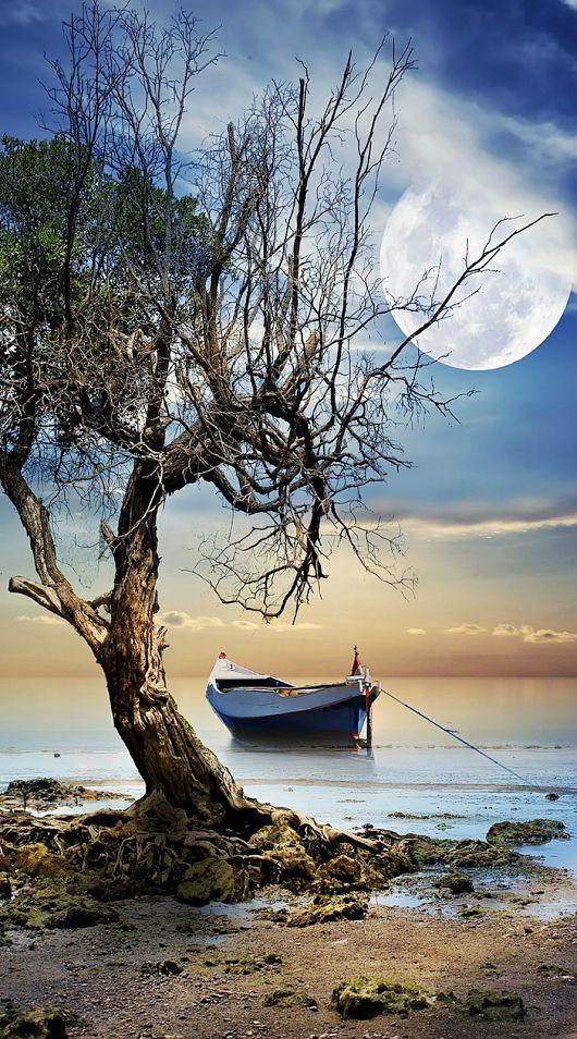 bonzour bonne zournée et bonne nuit notre ti nid za nous - Page 3 14833910