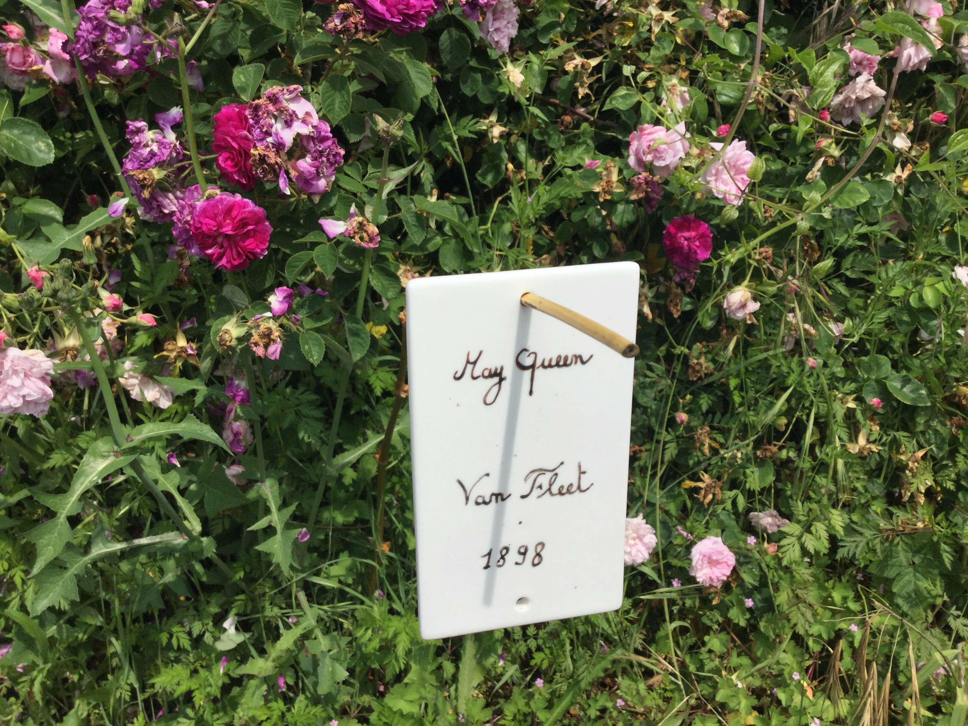 La Roseraie des Pommiers en Ardèche 14b87110