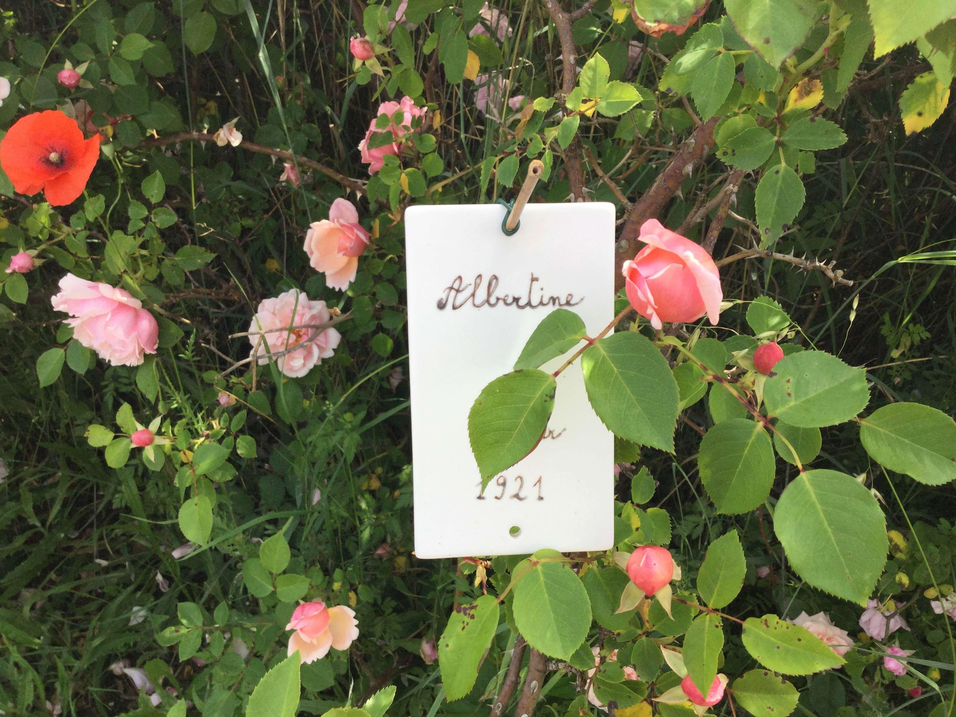 La Roseraie des Pommiers en Ardèche 2252a310