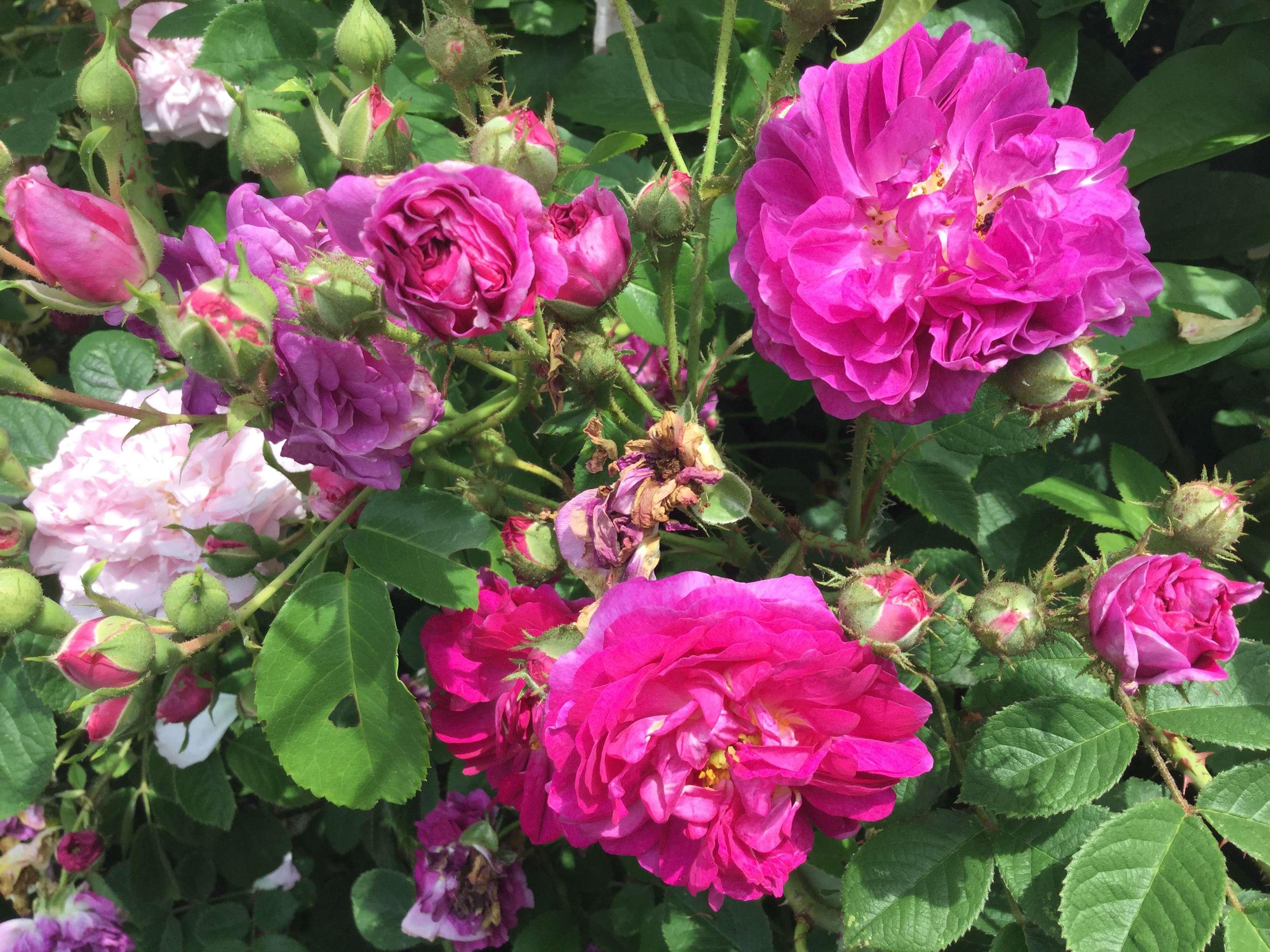 La Roseraie des Pommiers en Ardèche 28c29e10