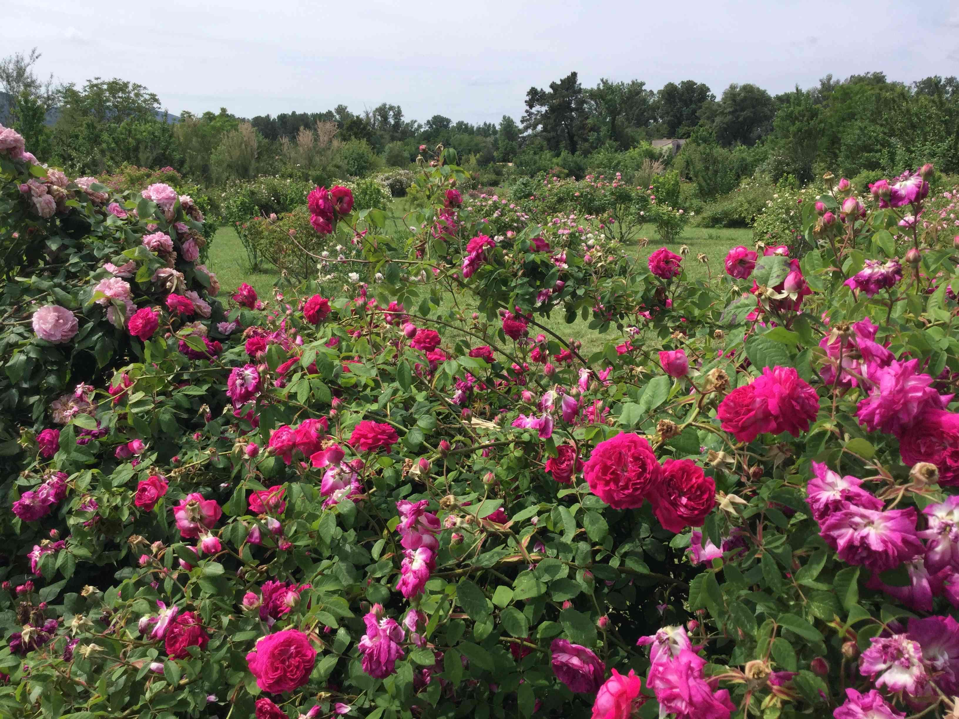 La Roseraie des Pommiers en Ardèche 2a295f10