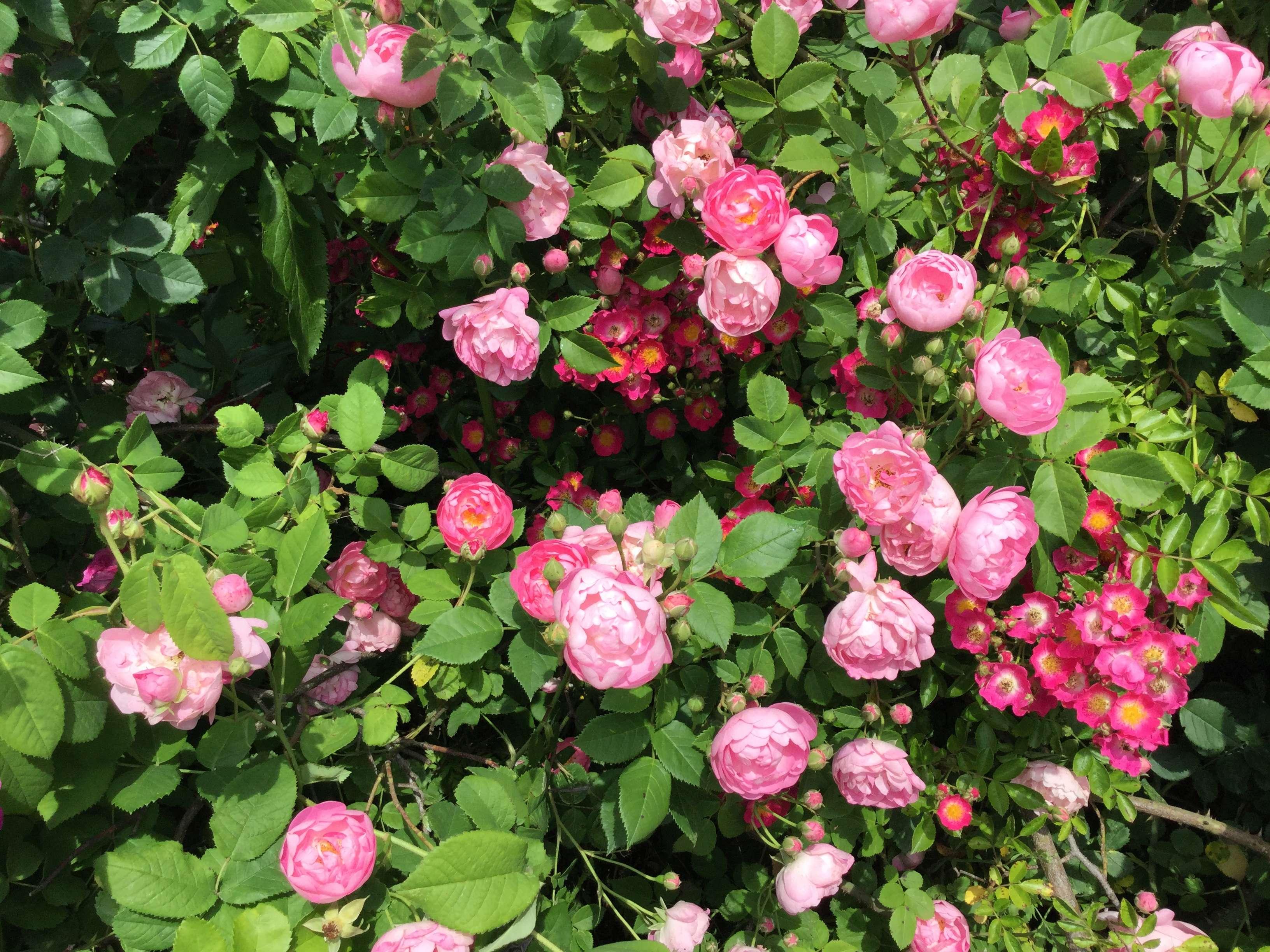 La Roseraie des Pommiers en Ardèche 3cd95e10
