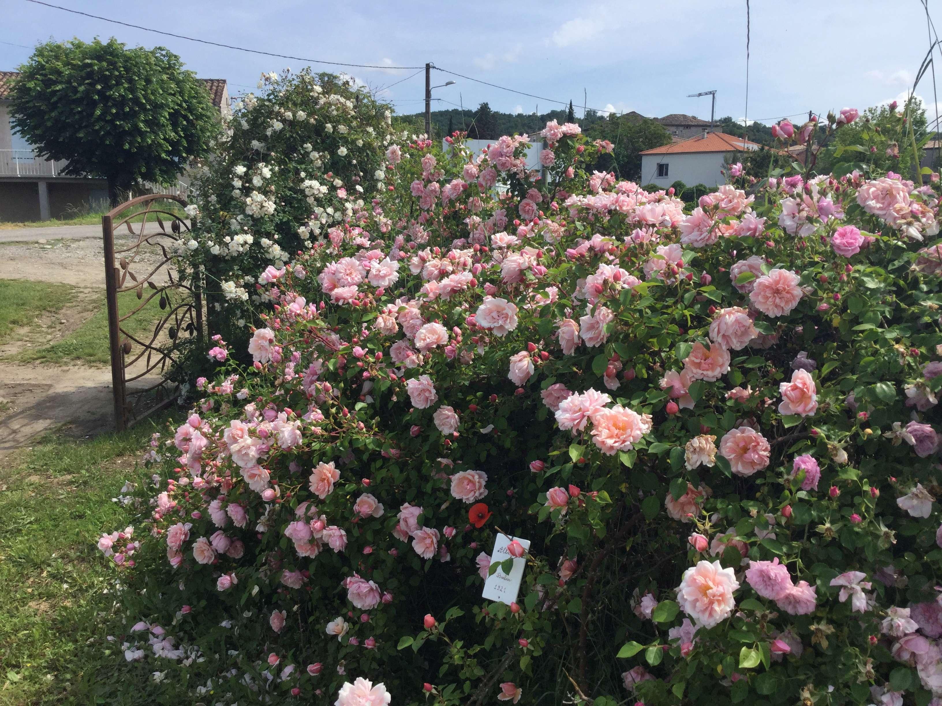 La Roseraie des Pommiers en Ardèche 437e0810