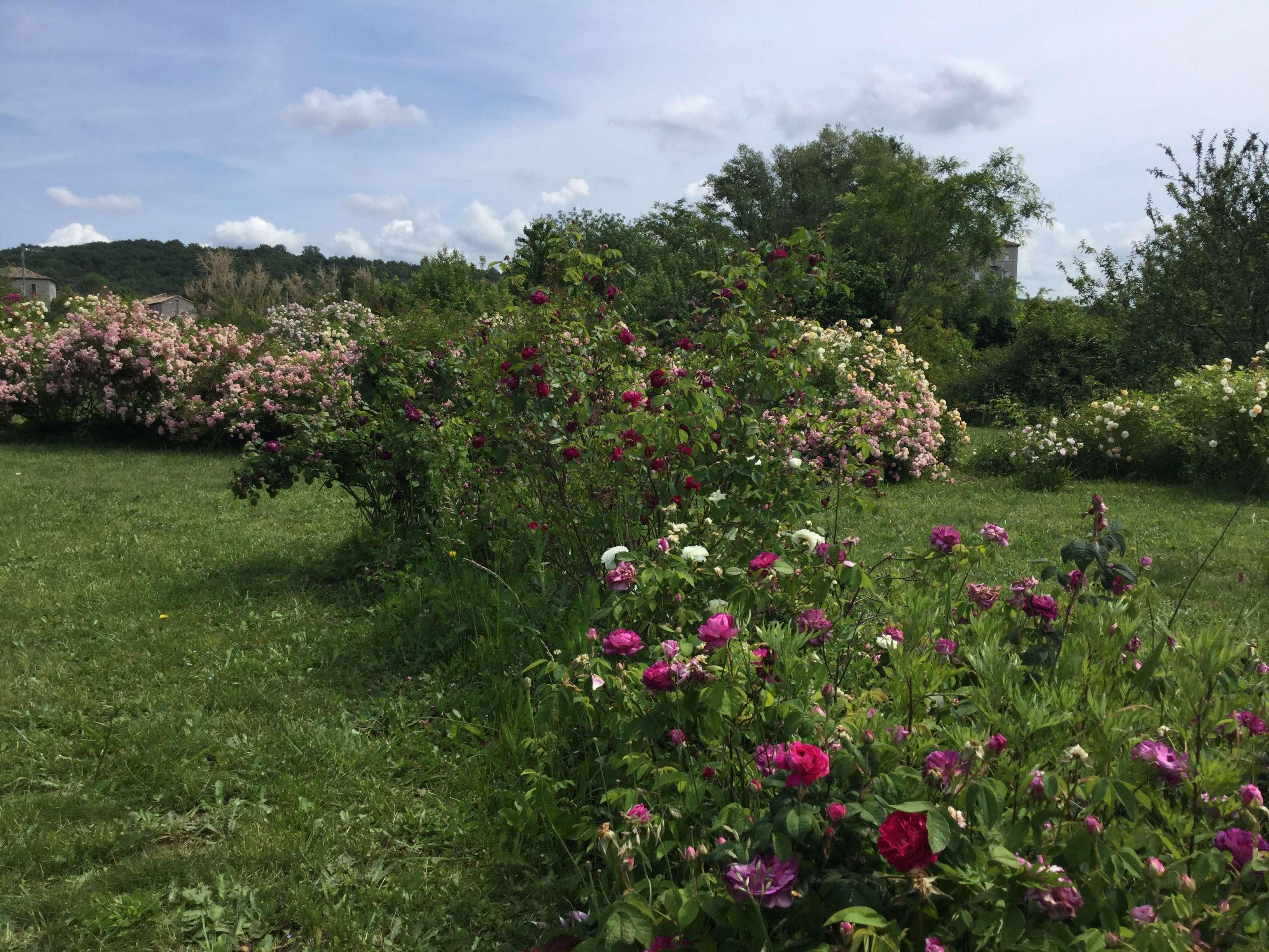 La Roseraie des Pommiers en Ardèche 54285610