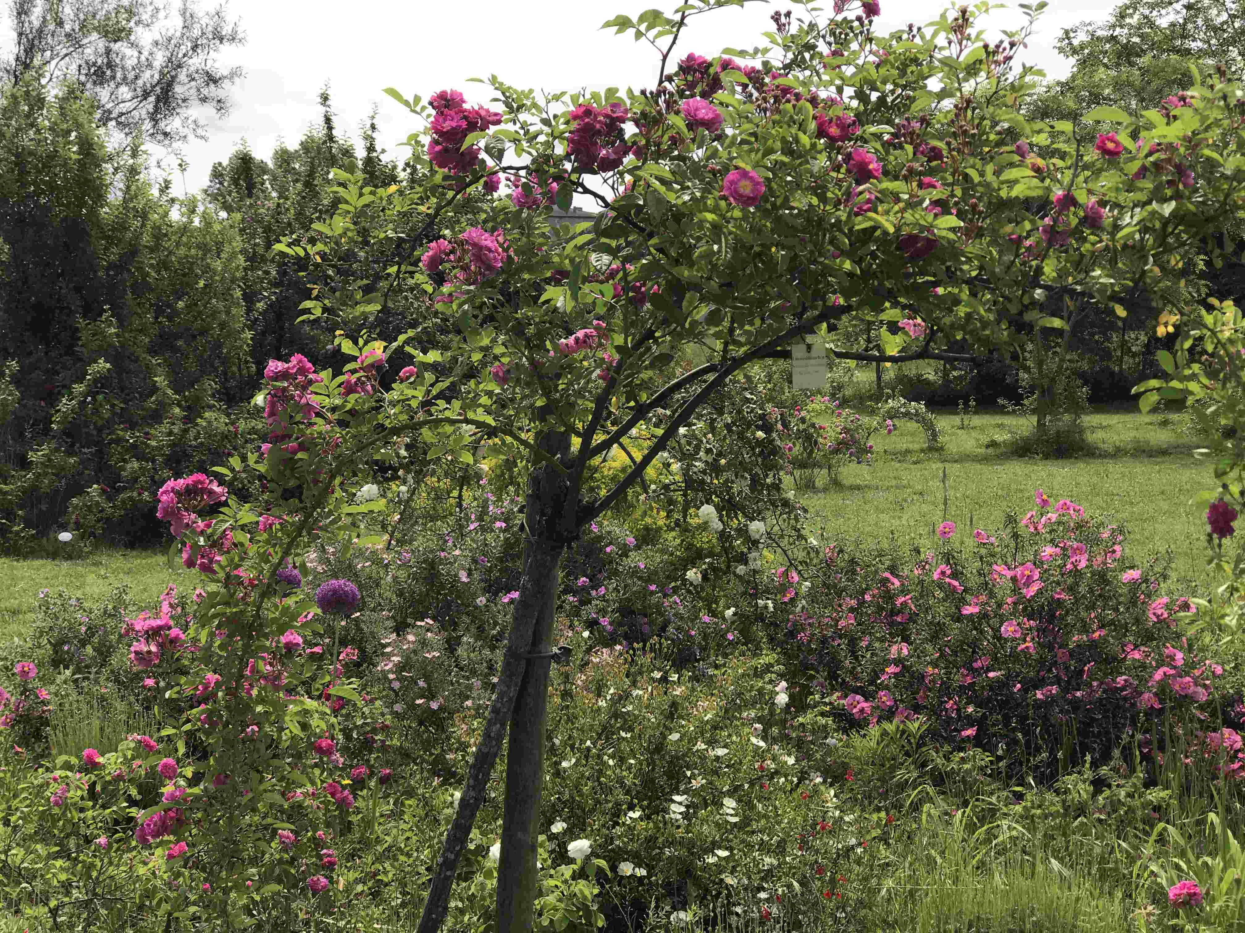 La Roseraie des Pommiers en Ardèche Af425a10