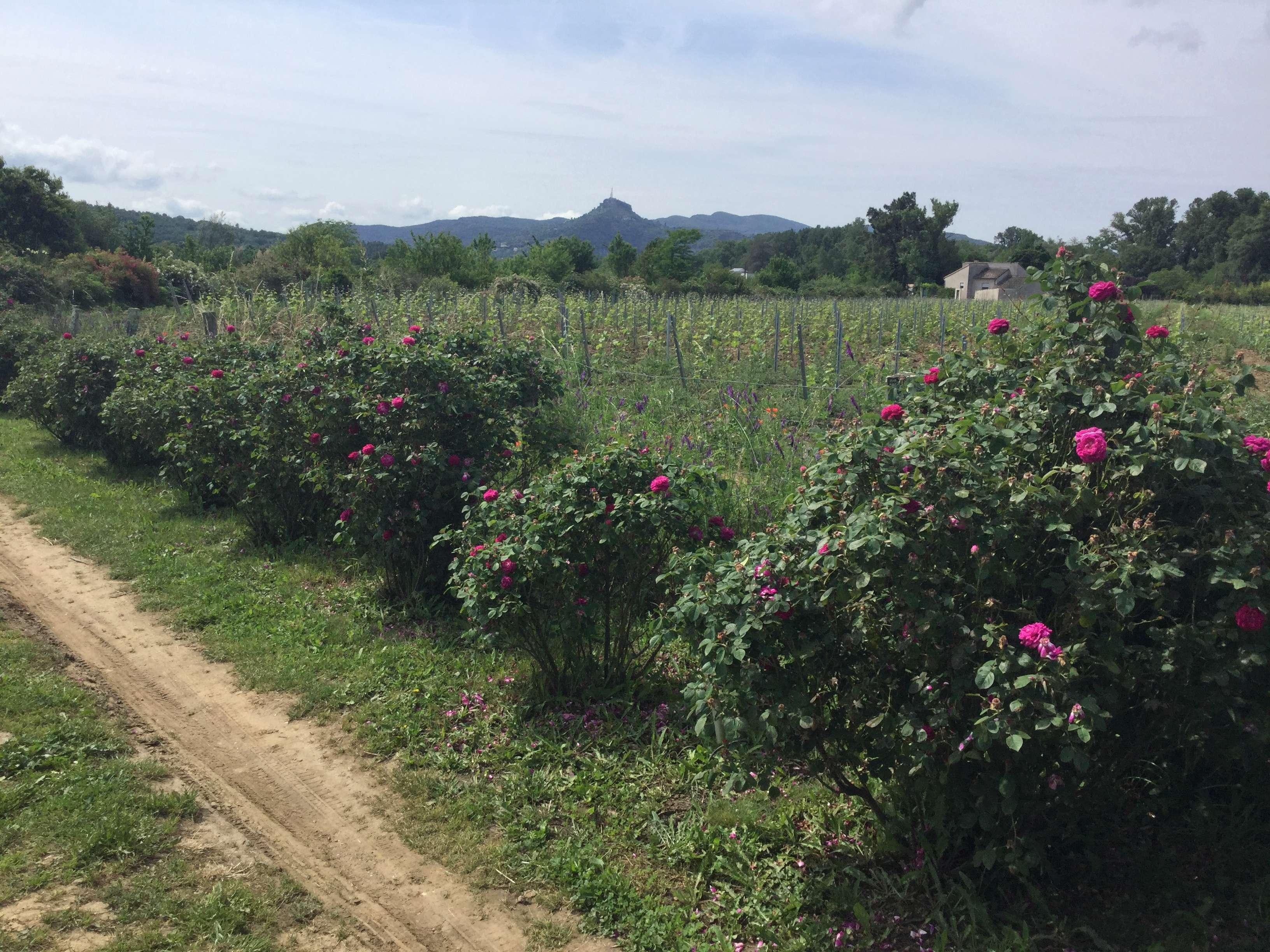 La Roseraie des Pommiers en Ardèche C5f8f010