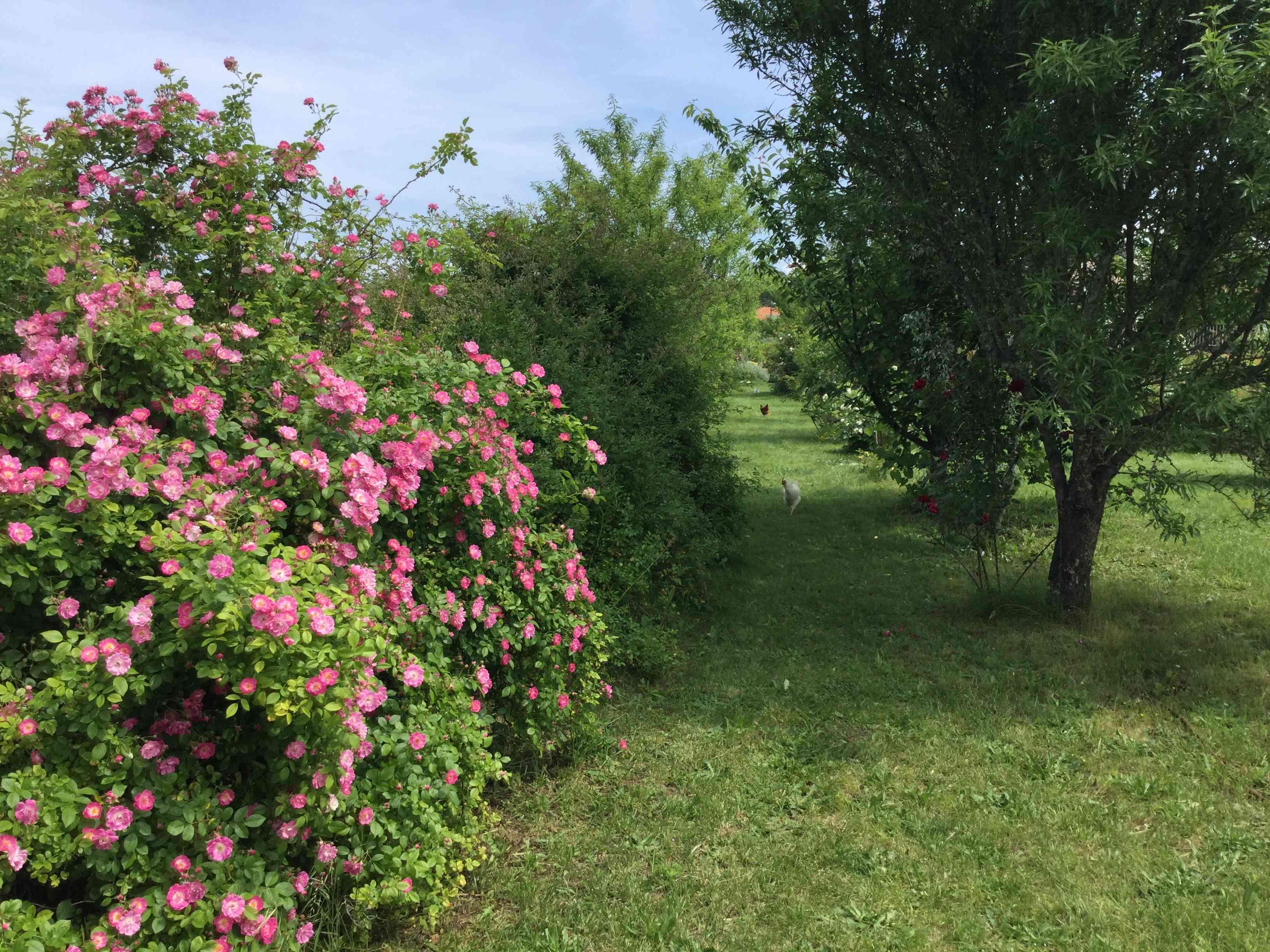 La Roseraie des Pommiers en Ardèche Ed00e710