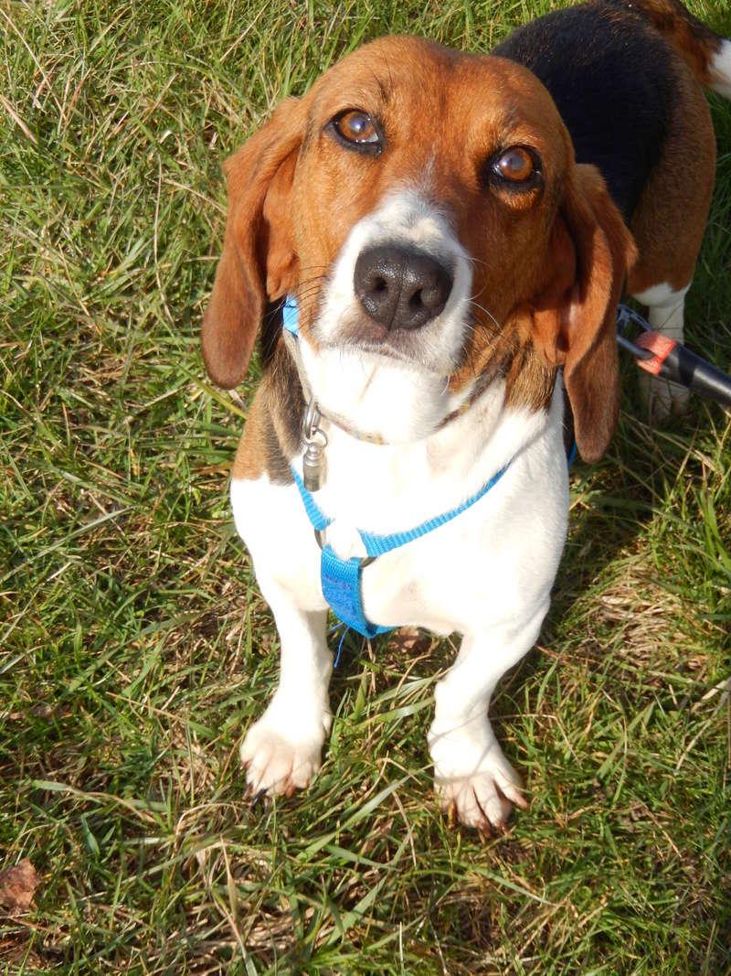 LOLI (femelle beagle) 10dscn23