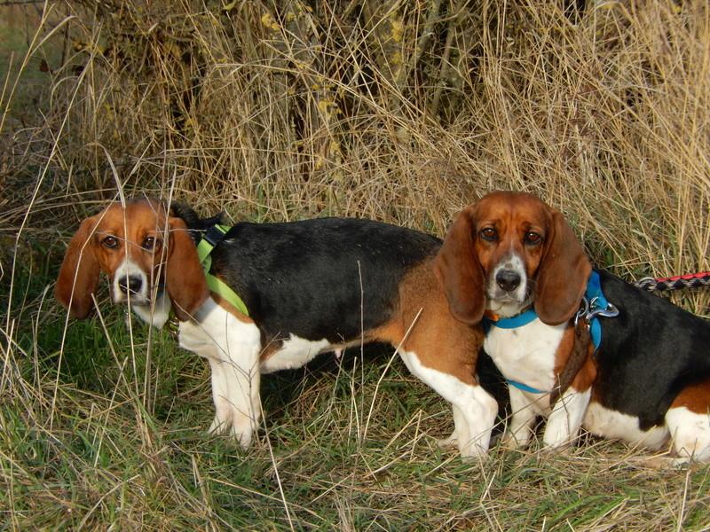LOLI (femelle beagle) 1dscn416