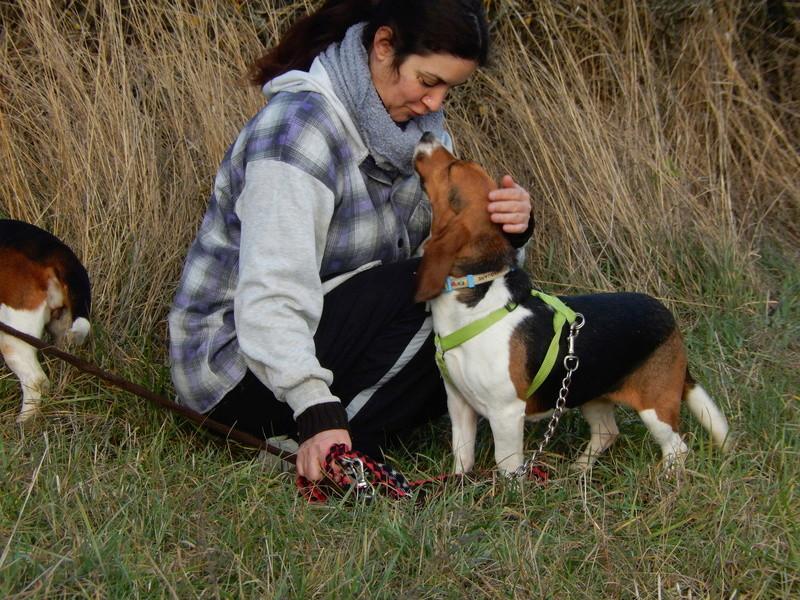 LOLI (femelle beagle) 4dscn420