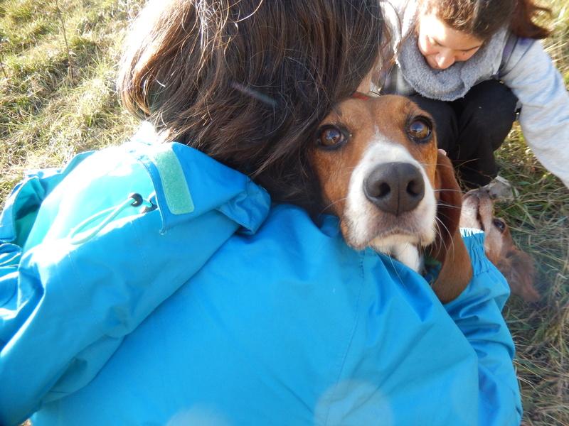 LOLI (femelle beagle) 5dscn418
