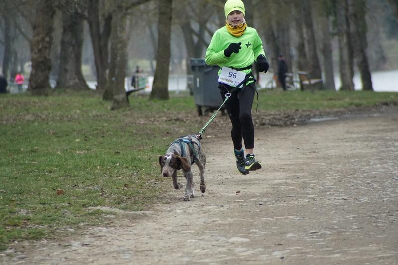 LOOMIS (chienne braque croisée) Dsc01010